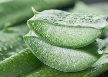 Aloe Vera for Breast Care
